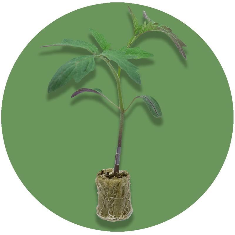 round_plant_isolated_800x800